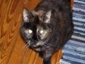 sparky2005-010