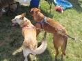 dogfest2010-006
