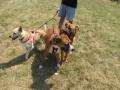 dogfest2010-021